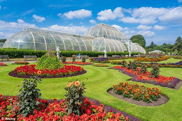 1412064850688_wps_1_E6NR14_Kew_Gardens_Palm_H