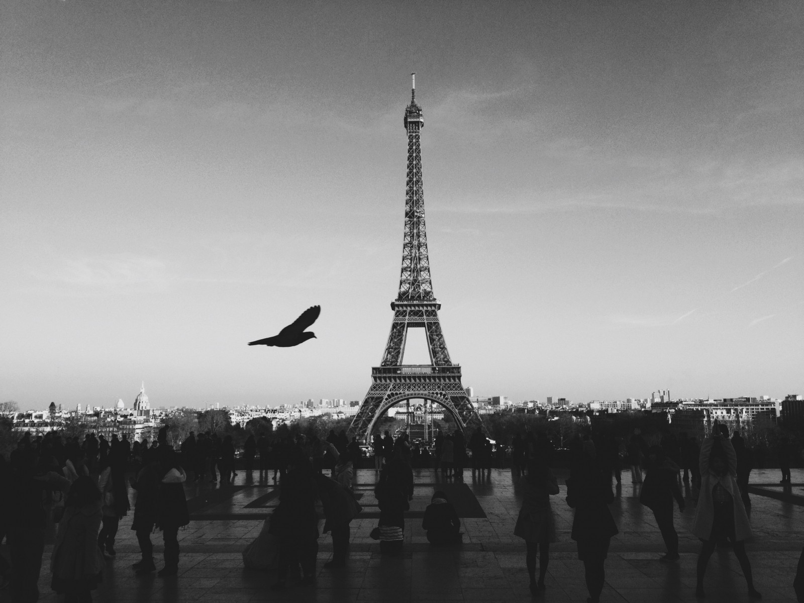 black-and-white-image-of-bird-flying-over-square-with-eiffel-tower-in-background
